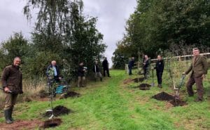 Planting the first trees